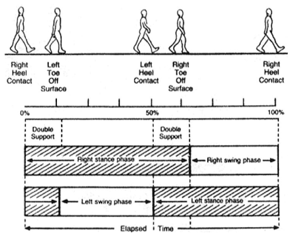 Figure 2.2: Analysis of different phases of human gait cycle.