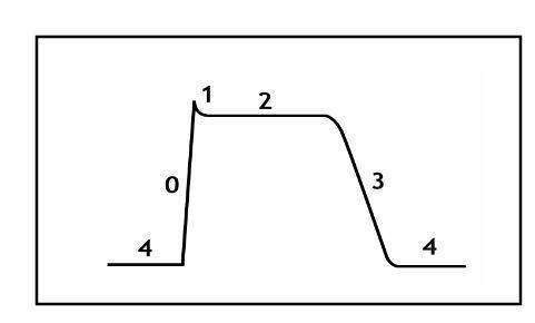 Figure 3 Cardiac Action Potential