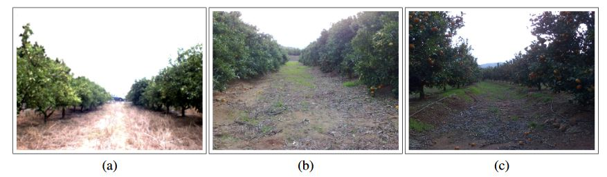 Figure 1. Image captured at an orange grove placed in Castell on (Spain)